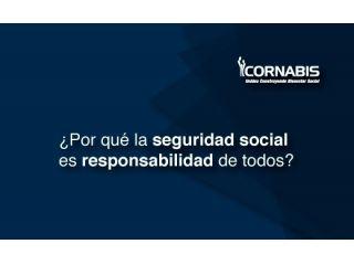 ¿Por qué la Seguridad Social es responsabilidad de todos?