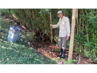Aprovechando los Residuos Orgánicos de la Casa o Finca