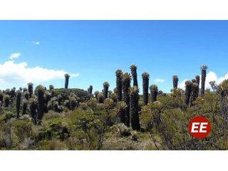 Se determinan acciones para la preservación y manejo del Páramo y el Parque Los Nevados