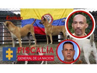 Hermana de funcionario cobró millones a la alcaldía de Dosquebradas por atender perros que otros pagaban