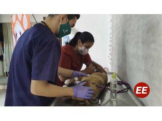 En Pereira, el gobierno de la ciudad avanza con el programa de Sisbén para perros y gatos
