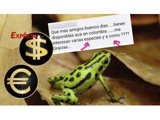 Los cazadores de ranas desisten por las denuncias y el escándalo