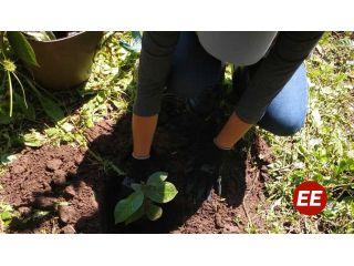 La CARDER avanza con actividades de reforestación en todo el departamento