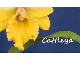 Creando los colores... Cattleya Parte 11