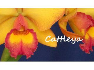 Creando los colores... Cattleya Parte 6